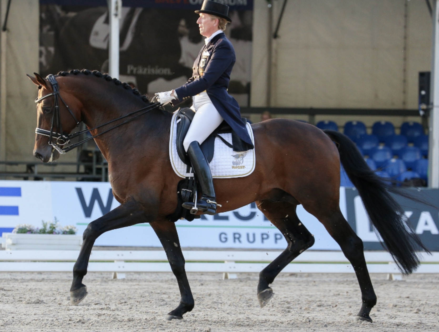 Outstanding 2009 Champion Danish Warmblood Licensing Stallion