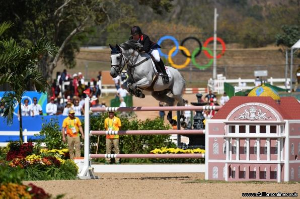 Olympic International Showjumping Stallion
