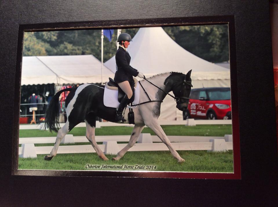 The Full Monty – Both a Grade A Showjumper, and a HOYS/RIHS Ridden Finalist